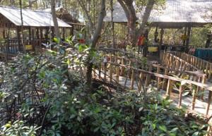Mangrove Bentar